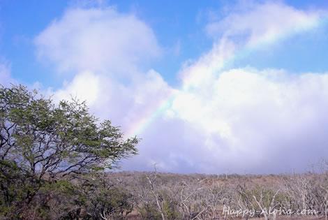 コハラの虹