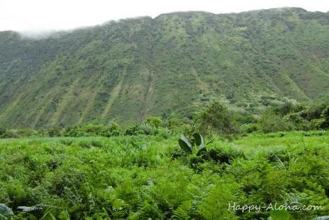 ワイピオの谷