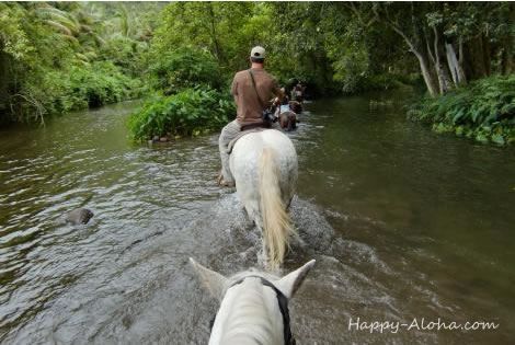 川を歩く馬
