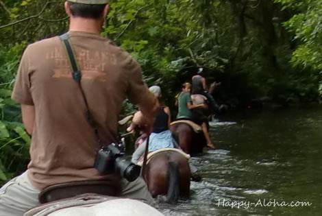 ワイピオ渓谷を乗馬で川を歩くツアー