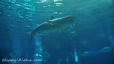 トンネル水槽のサメ