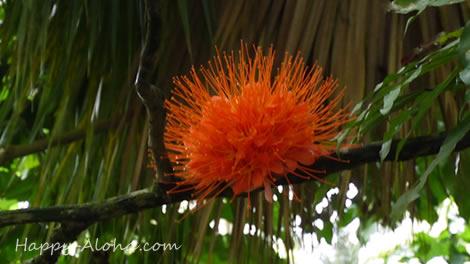ワヒアワボタニカルガーデンで珍しい植物を観る