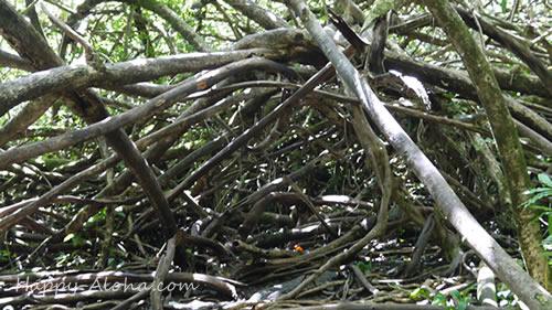バニヤンツリーだらけ