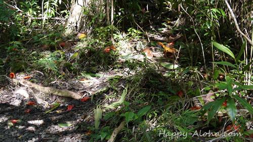 地表に落ちたアフリカンチューリップの花