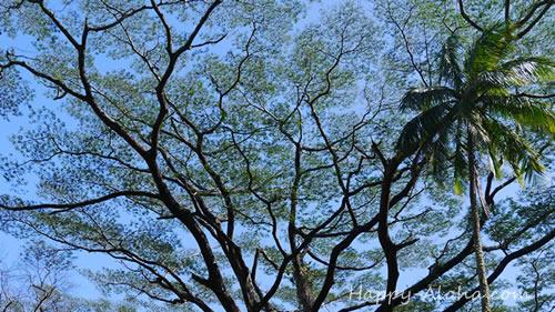 ねむの木と空