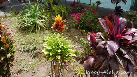 ハワイの植物