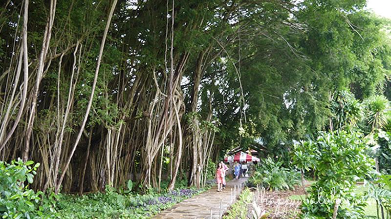 バニアンツリー横の道