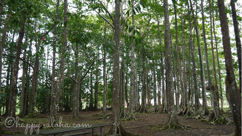 菩提樹の森