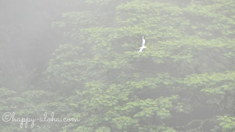 ワイルア滝をとぶ鳥