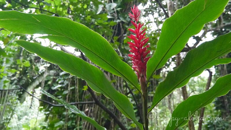 南国の植物