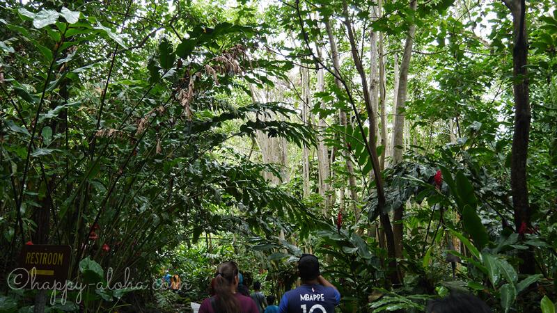 ジャングルのような森