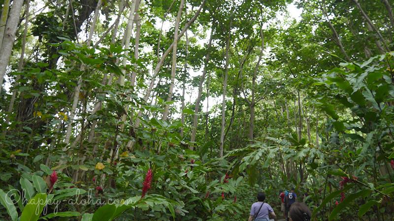 森の中を歩く
