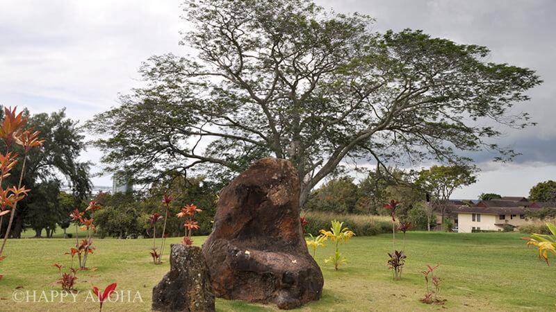幸運の石と樹