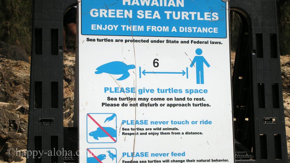 アオウミガメに触ってはいけないという看板